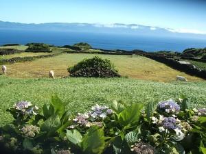 Pico Azores